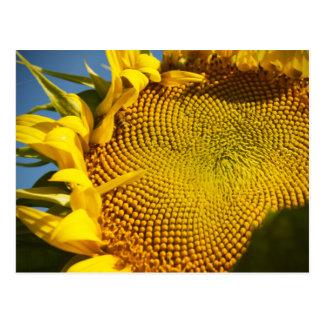 Sunflower and Bee Postcard