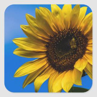 Sunflower and bee square sticker