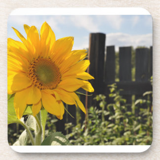Sunflower and Fence Drink Coaster