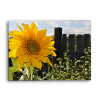 Sunflower and Fence Envelopes