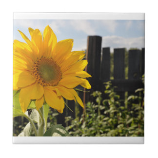Sunflower and Fence Small Square Tile