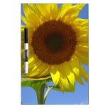 Sunflower and Honey Bee Dry-Erase Board