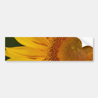 Sunflower and meaning bumper stickers