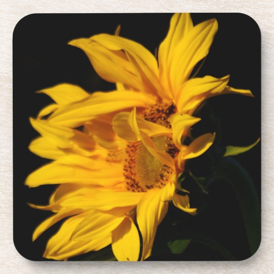 Sunflower and meaning coaster