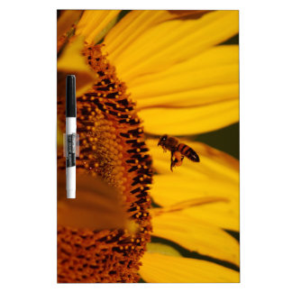 Sunflower and meaning Dry-Erase board