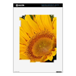 Sunflower and meaning iPad 3 skins
