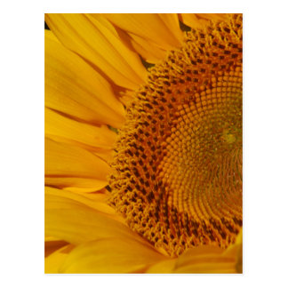 Sunflower and meaning postcards