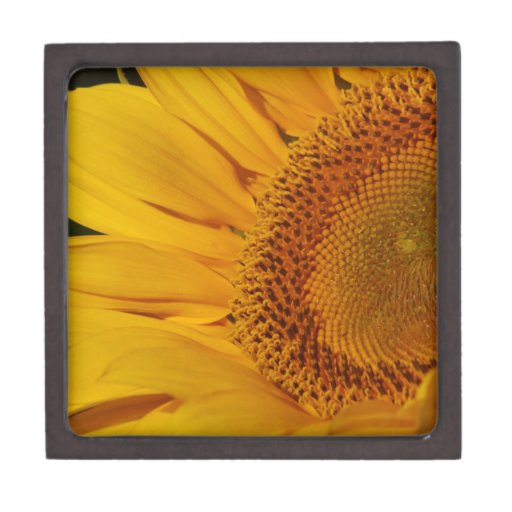 Sunflower and meaning premium keepsake boxes