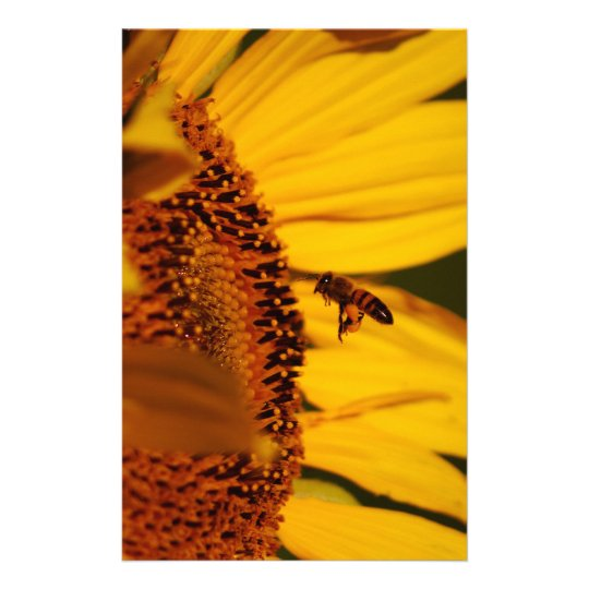 Sunflower and meaning stationery