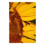 Sunflower and meaning stationery design