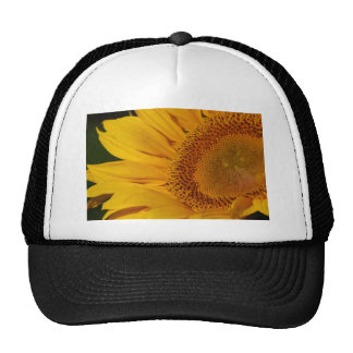 Sunflower and meaning trucker hat