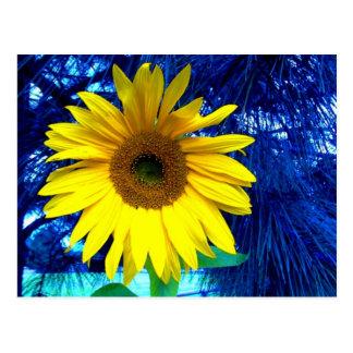 Sunflower and Pine Postcard