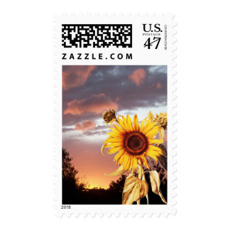SUNFLOWER AND PINK SUMMER SUNSET POSTAGE