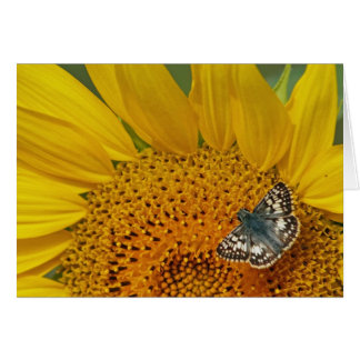 Sunflower and Skipper Butterfly Birthday Card