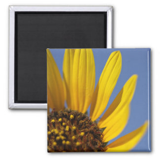 Sunflower and Sky 2 Inch Square Magnet