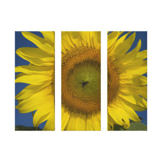 Sunflower and Sky Three Panel Wrapped Canvas Print