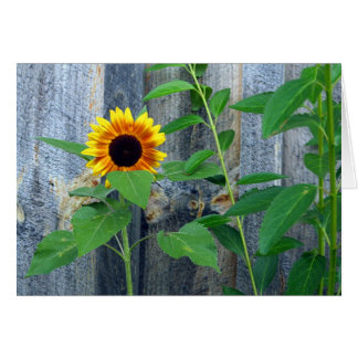 Sunflower and Wooden Wall Greeting Card