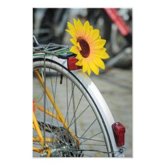 Sunflower Art Photo