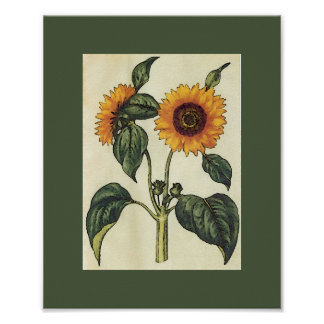 Sunflower Artwork Adaptation 8.5 x 10.5 inches Poster