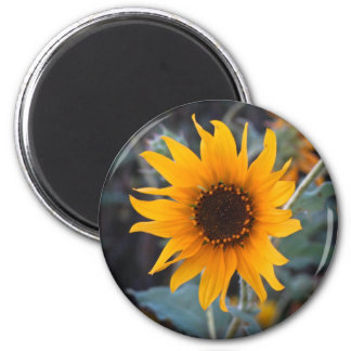 Sunflower at Dusk Fridge Magnet
