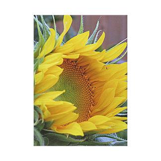 Sunflower Awakening Canvas Print