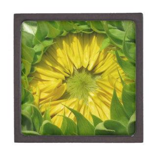 Sunflower Awakes Gift Box