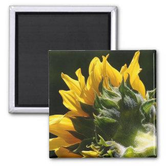 Sunflower backside magnet