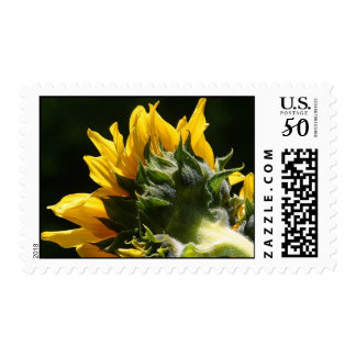 Sunflower backside postage