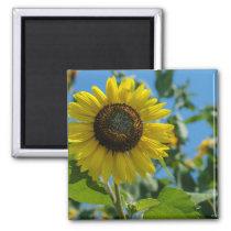 Sunflower Beauty Magnet
