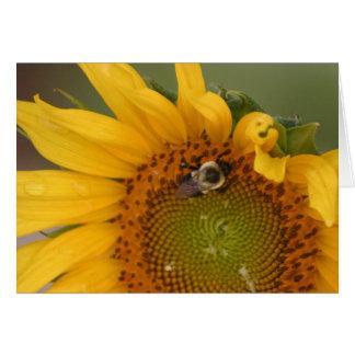 sunflower-bee card