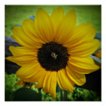 Sunflower & Bee Poster Art