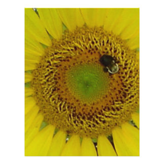Sunflower Bee Pretty Personalized Flyer