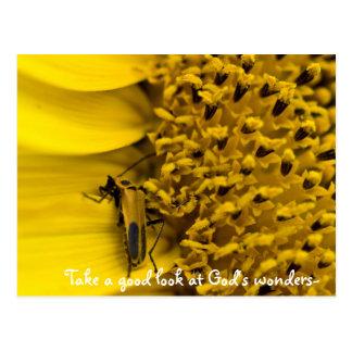 sunflower beetle, Take a good look at God's won... Postcard