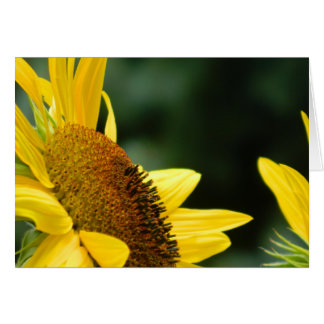 Sunflower Blank Greeting Card