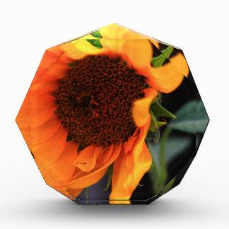 Sunflower bloom award
