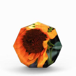 Sunflower bloom awards