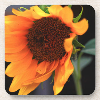Sunflower bloom beverage coaster