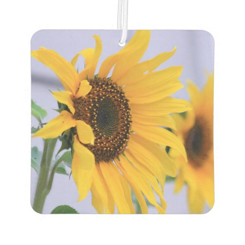 Sunflower bloom car air freshner car air freshener