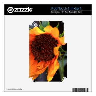 Sunflower bloom decal for iPod touch 4G