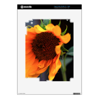 Sunflower bloom decal for the iPad 2
