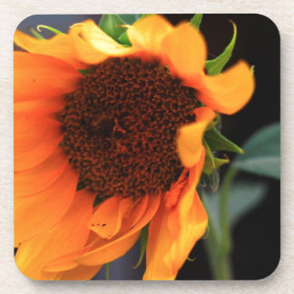 Sunflower bloom drink coaster