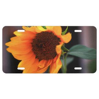 Sunflower bloom license plate