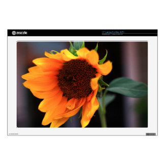 Sunflower bloom skin for laptop