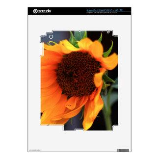 Sunflower bloom skins for iPad 3