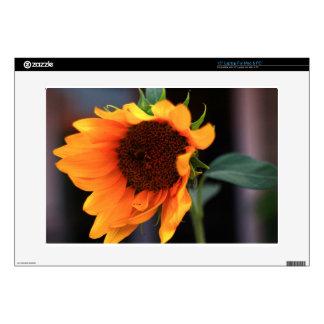 Sunflower bloom skins for laptops