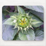 Sunflower Blooming Mouse Pad