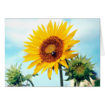 Sunflower Blue Sky Cards