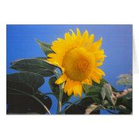 Sunflower Blue Sky Stationery Note Card