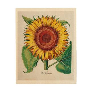 Sunflower-Botanical Illustration - Wood Canvas Wood Wall Art