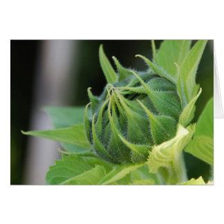 Sunflower Bud Card